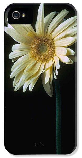Gerber Daisy IPhone 5 Case