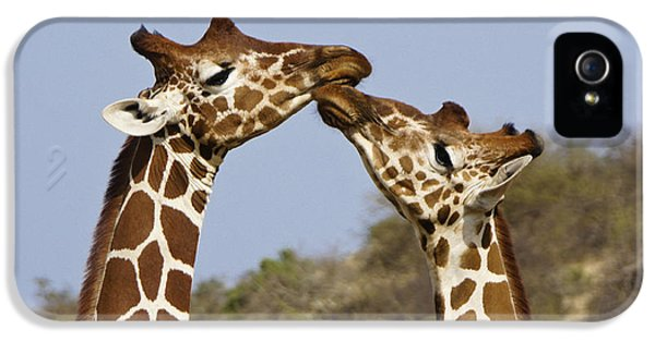 Giraffe Kisses IPhone 5 Case by Michele Burgess