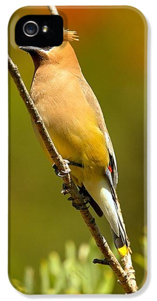 Glacier Cedar Waxwing IPhone 5 / 5s Case by Adam Jewell