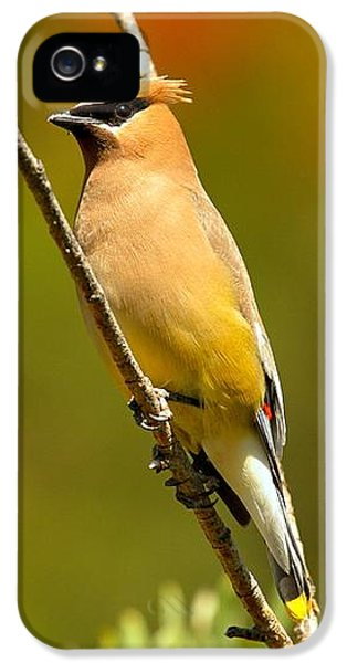 Glacier Cedar Waxwing IPhone 5 Case
