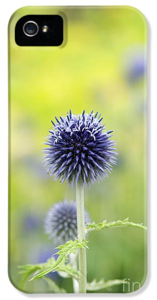 Globe Thistle Flowering IPhone 5 Case by Tim Gainey