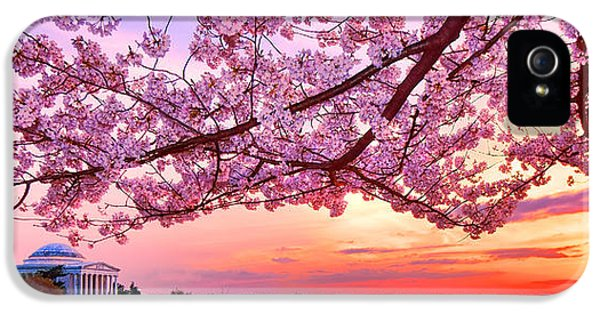 Glorious Sunset Over Cherry Tree At The Jefferson Memorial  IPhone 5 Case by Olivier Le Queinec