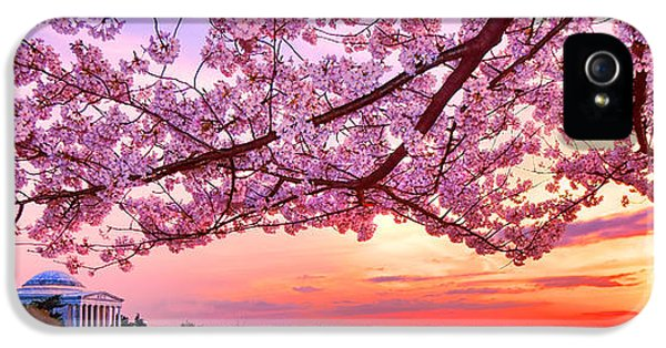 Glorious Sunset Over Cherry Tree At The Jefferson Memorial  IPhone 5 Case