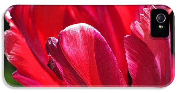 Glowing Red Tulip IPhone 5 Case by Rona Black