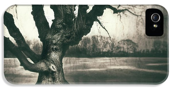 Gnarled Old Tree IPhone 5 Case by Scott Norris