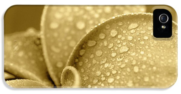 Gold Plumeria Droplets. IPhone 5 Case