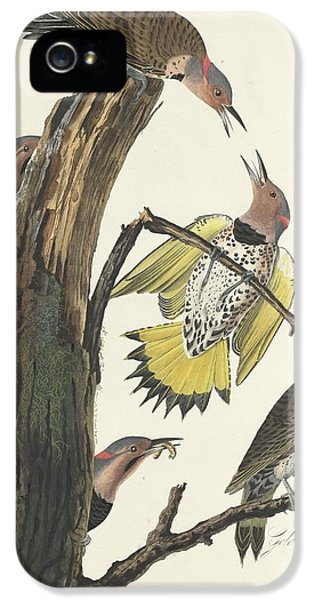 Gold-winged Woodpecker IPhone 5 Case