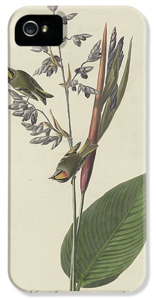 Golden-crested Wren IPhone 5 Case by Rob Dreyer