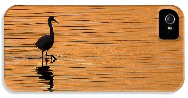 Golden Egret IPhone 5 Case