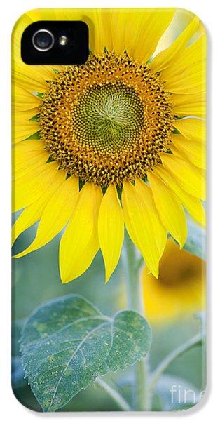 Sunflower iPhone 5 Case - Golden Sunflower by Tim Gainey