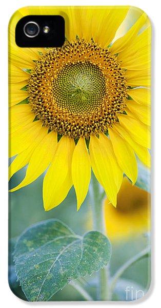 Golden Sunflower IPhone 5 Case by Tim Gainey