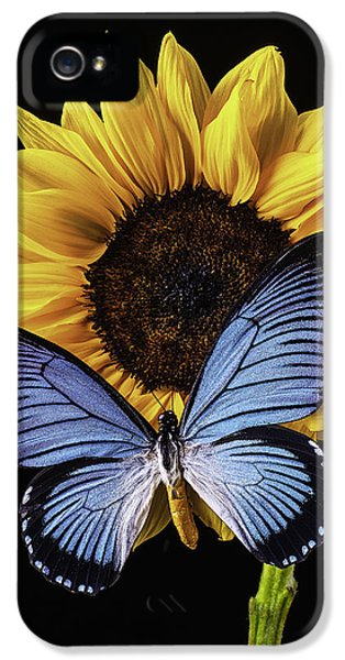 Gorgeous Blue Butterfly IPhone 5 Case