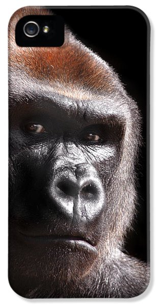 Gorilla ... Kouillou IPhone 5 Case by Stephie Butler