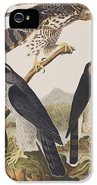 Goshawk And Stanley Hawk IPhone 5 Case by John James Audubon
