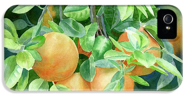 Grapefruit With Background IPhone 5 Case by Sharon Freeman