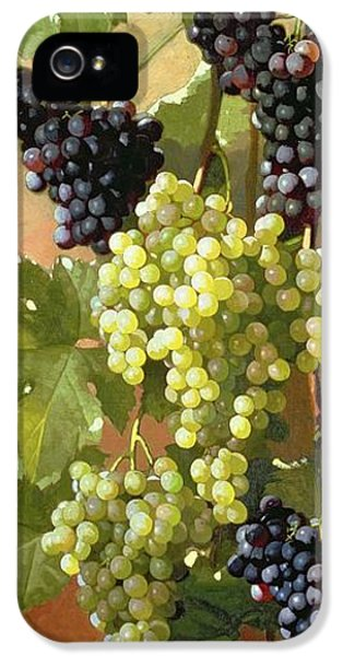 Grapes IPhone 5 Case by Edward Chalmers Leavitt