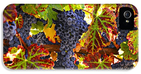 Grapes On Vine In Vineyards IPhone 5 Case by Garry Gay