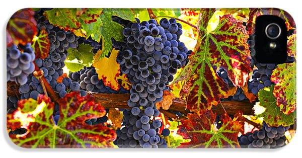 Grapes On Vine In Vineyards IPhone 5 / 5s Case by Garry Gay