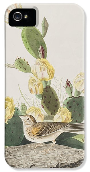 Grass Finch Or Bay Winged Bunting IPhone 5 Case by John James Audubon