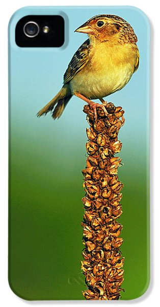 Grasshopper Sparrow IPhone 5 Case by Tony Beck