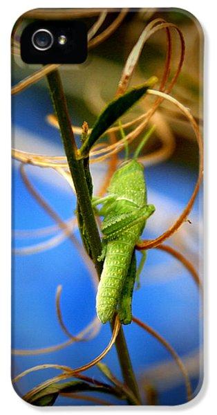 Grassy Hopper IPhone 5 Case by Chris Brannen