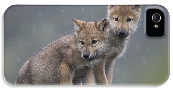 Wolf iPhone 5 Case - Gray Wolf Canis Lupus Pups In Light by Tim Fitzharris