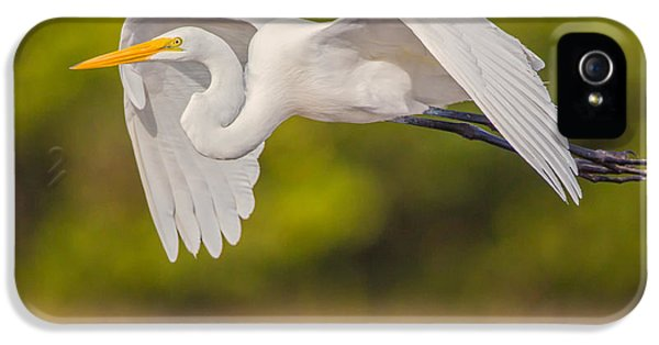 Great Egret Folded Wings IPhone 5 Case