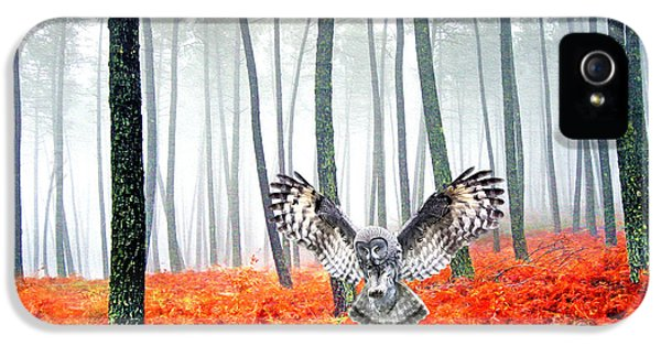 Owl iPhone 5 Case - Great Grey Owl by Laura D Young