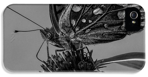 Great Spangled Fritillary Black And White IPhone 5 Case by Bob Orsillo