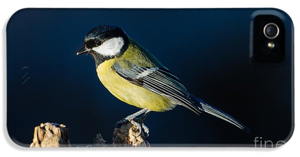 Great Tit On The Stump IPhone 5 Case by Torbjorn Swenelius