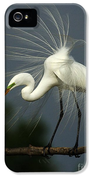 Majestic Great White Egret High Island Texas IPhone 5 / 5s Case by Bob Christopher
