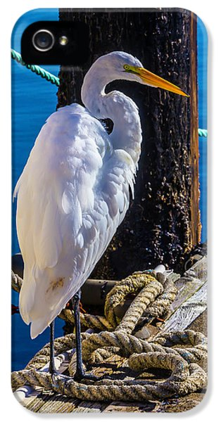 Great White Heron On Boat Dock IPhone 5 / 5s Case by Garry Gay