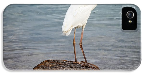 Great White Heron With Fish IPhone 5 Case by Elena Elisseeva