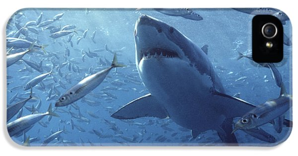 Great White Shark Carcharodon IPhone 5 Case