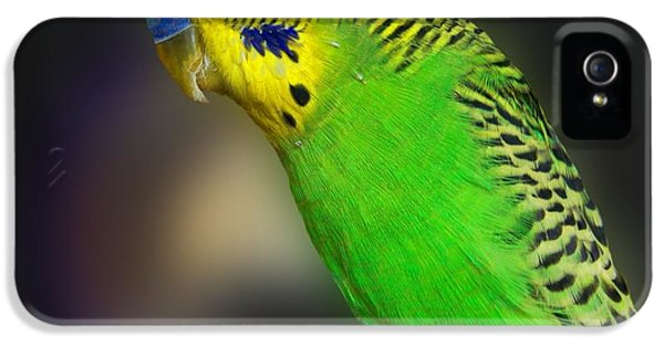Green Parakeet Portrait IPhone 5 / 5s Case by Jai Johnson