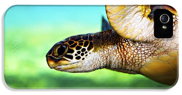 Turtle iPhone 5 Case - Green Sea Turtle by Marilyn Hunt