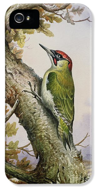 Green Woodpecker IPhone 5 Case by Carl Donner