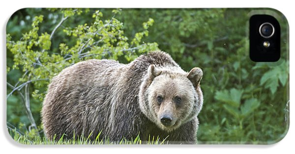 IPhone 5 Case featuring the photograph Grizzly Bear by Gary Lengyel