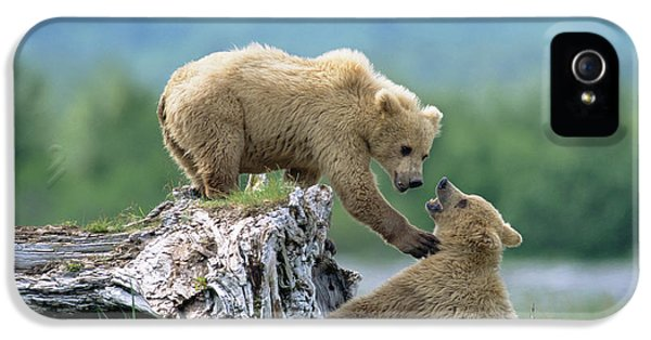 Brown Bear iPhone 5 Case - Grizzly Sisters Playing by Yva Momatiuk John Eastcott