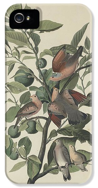 Ground Dove IPhone 5 Case by Rob Dreyer