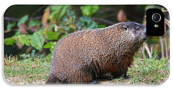 Groundhog  0590 IPhone 5 / 5s Case by Jack Schultz