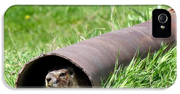 Groundhog In A Pipe IPhone 5 / 5s Case by Will Borden