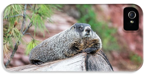 Groundhog On A Log IPhone 5 / 5s Case by Jess Kraft
