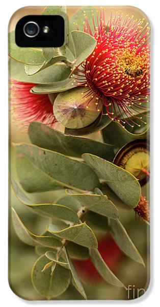 IPhone 5 Case featuring the photograph Gum Nuts by Werner Padarin