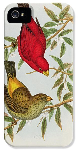 Haematospiza Sipahi IPhone 5 Case by John Gould