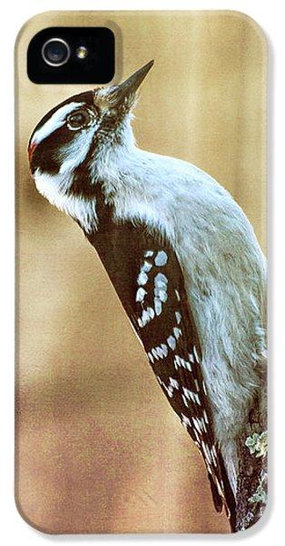 Hairy Woodpecker IPhone 5 Case