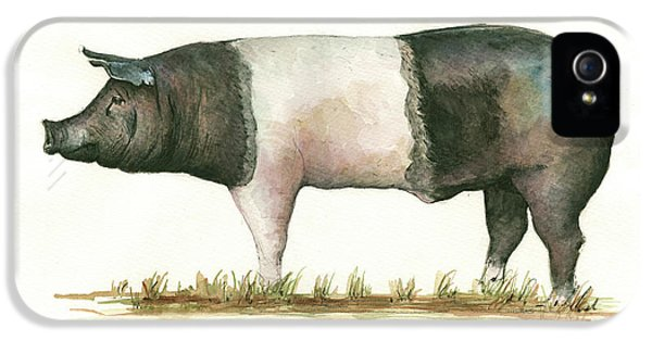Pig iPhone 5 Case - Hampshire Pig by Juan Bosco