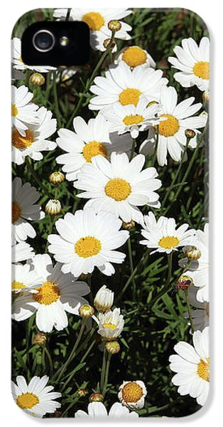 Daisy iPhone 5 Case - Happy Daisies- Photography By Linda Woods by Linda Woods