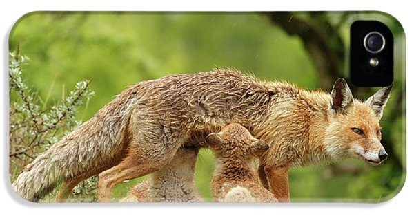 Happy Moments - Mother Fox Suckling Her Fox Kits IPhone 5 Case by Roeselien Raimond