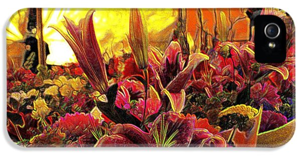 Harim IPhone 5 Case by Terence Morrissey